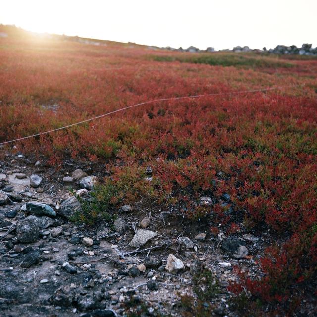 landscape_0058